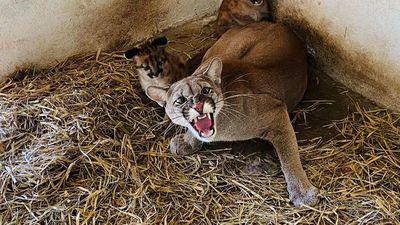 Refugio  de Yacyretá   reproduce  especies en peligro de extinción