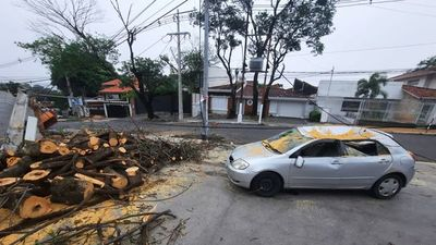 Temporal deja basura, árboles caídos y zonas sin energía