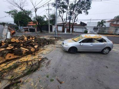 Temporal deja basura, árboles caídos y zonas sin energía en Asunción