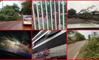 Árboles caídos y casas destechadas dejó el temporal en Alto Paraná