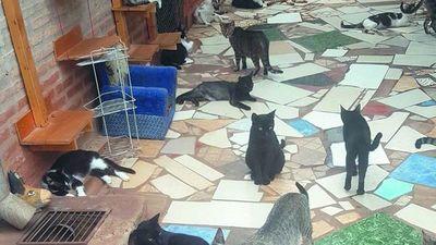 Matan gatitos negros en el mes de rituales