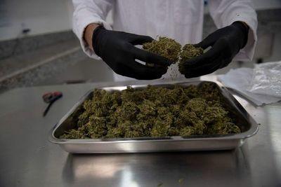 Panamá legaliza el uso medicinal y terapéutico del cannabis