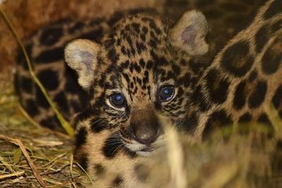 Refugio faunístico de Yacyretá logra exitosa reproducción de dos especies amenazadas