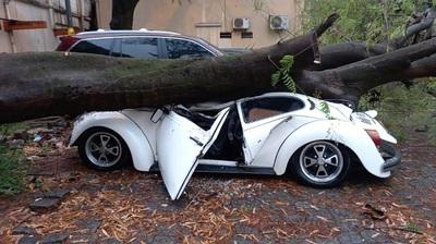 Árbol cae y aplasta un Fusca en el estacionamiento de IPS