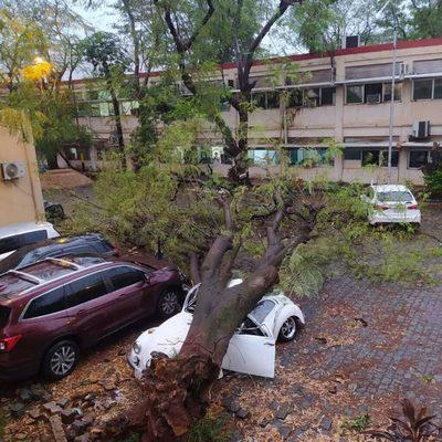 Árbol cae sobre vehículos en IPS central