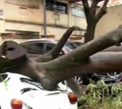 Árbol aplasta vehículo en predio de IPS