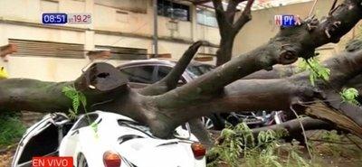 Frondoso árbol cae sobre un automóvil en predio del IPS