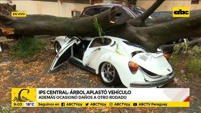Un árbol cayó en IPS Central, aplastó un vehículo y ocasionó daños a otro