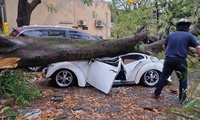 Árbol cae y destroza automovil en el estacionamiento del Hospital Central del IPS