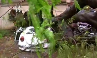 Árbol aplastó un auto en el IPS central