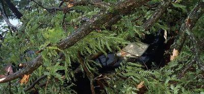 Otro auto fue afectado por la caída de un árbol en IPS