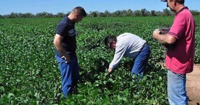 La Nación / Registran excelentes resultados tras siembra de soja