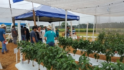 Preparan expo feria sobre producción hortícola en Paraguay