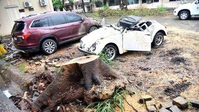 Autos aplastados por árboles caídos y toneladas de basura tras temporal