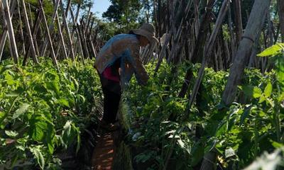 Nace ARA, iniciativa para valorizar la agricultura familiar paraguaya – Prensa 5
