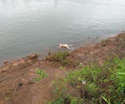 Hallan cadáver en el río Paraná