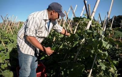 Nace ARA, iniciativa para valorizar la agricultura familiar paraguaya •