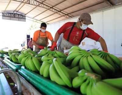 Exportación de bananas a la Argentina registra récord