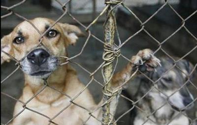 DIDESANI: trabajan para erradicar el maltrato animal