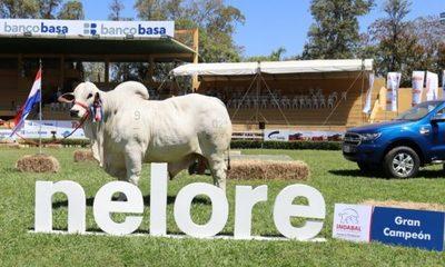 Ferusa vende los Mochos Blancos de Goya, mañana domingo