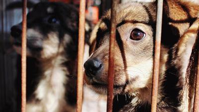Institución trabajará por la erradicación del maltrato animal