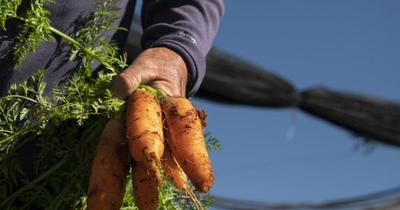 Agricultura familiar: factor fundamental para enfrentar el hambre y reducir la pobreza