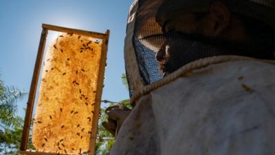 Nace ARA, iniciativa para valorizar la agricultura familiar paraguaya