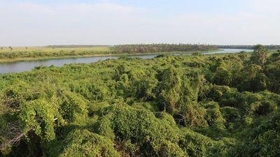 Naufragio de barco en río Paraguay deja 3 muertos y 4 desaparecidos