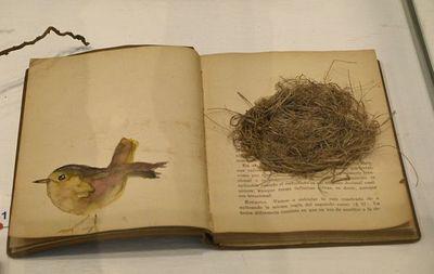 Exposición El mundo es un nido
