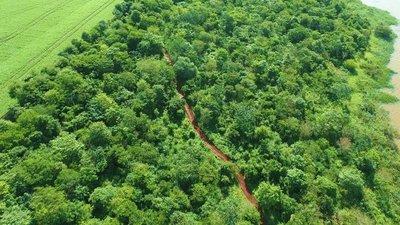 Itaipu conmemora Día de las Áreas Silvestres Protegidas con acciones de conservación