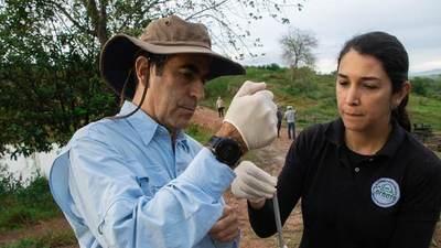 Inicia en Colombia un plan experimental de inmunocastración de los hipopótamos de Pablo Escobar