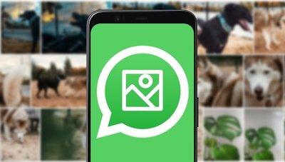 ¿Agregar a un contacto de WhatsApp sin pedirle su número?; paso a paso