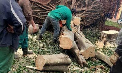 Municipalidad sigue retirando de la vía pública los restos de la última tormenta – Diario TNPRESS