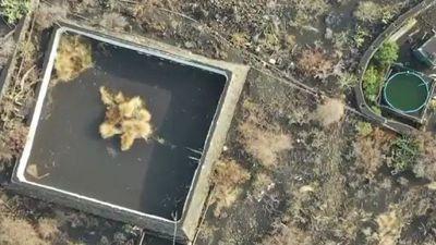 Tratarán de rescatar con drones a animales cercados por lava