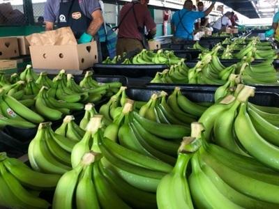 Paraguay, cerquita de superar récord de exportación de bananas a Argentina