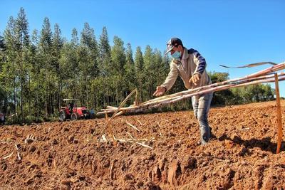 BNF cuenta con préstamos dirigidos al sector agropecuario afectados por sequías e incendios