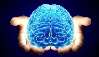 """El """"navegador"""" del cerebro y la ruta más corta"""