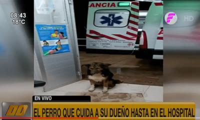 El perro que cuida a su dueña hasta en el hospital