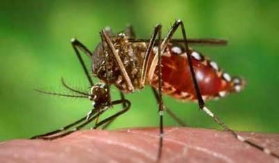 Notificaciones de dengue se registran en todos los departamentos – Prensa 5