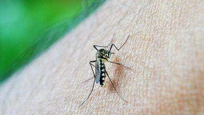 Registran circulación de dengue en todos los departamentos del país