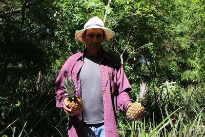 Productor de piña resalta necesidad de apoyo para incrementar producción en Ñeembucú