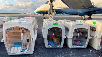 Trasladan de Miami a Canadá a 54 perros sin amo en busca de otra oportunidad