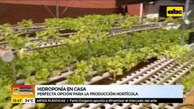Hidroponía en casa, perfecta opción para la producción hortícola