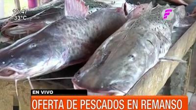 Ofertas de pescados ante proximidad de la veda en Remanso